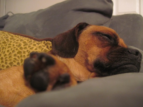 hector puggle sleep