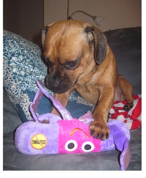 puggle chew toy2